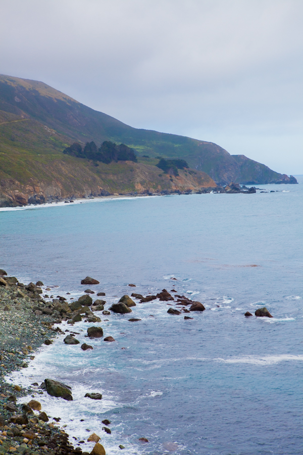 Coast & Elephant Seals-12