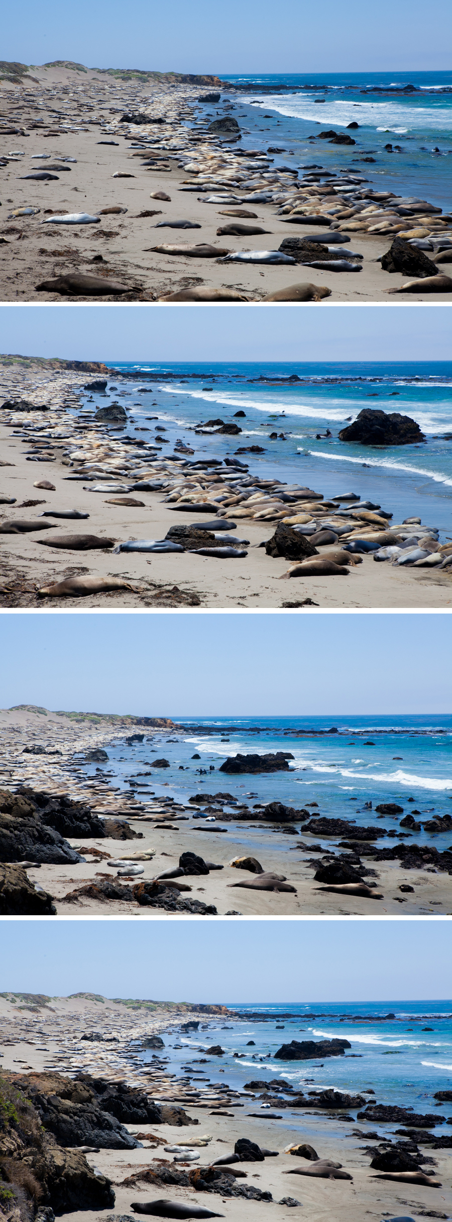 Coast & Elephant Seals-15