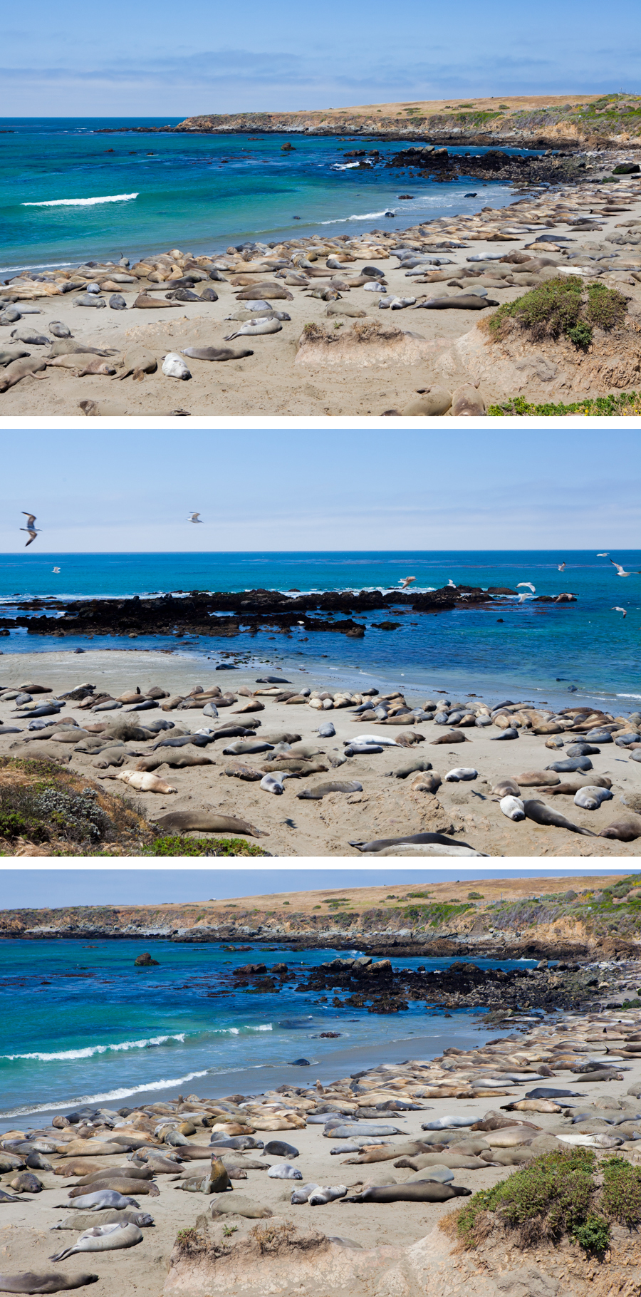 Coast & Elephant Seals-16