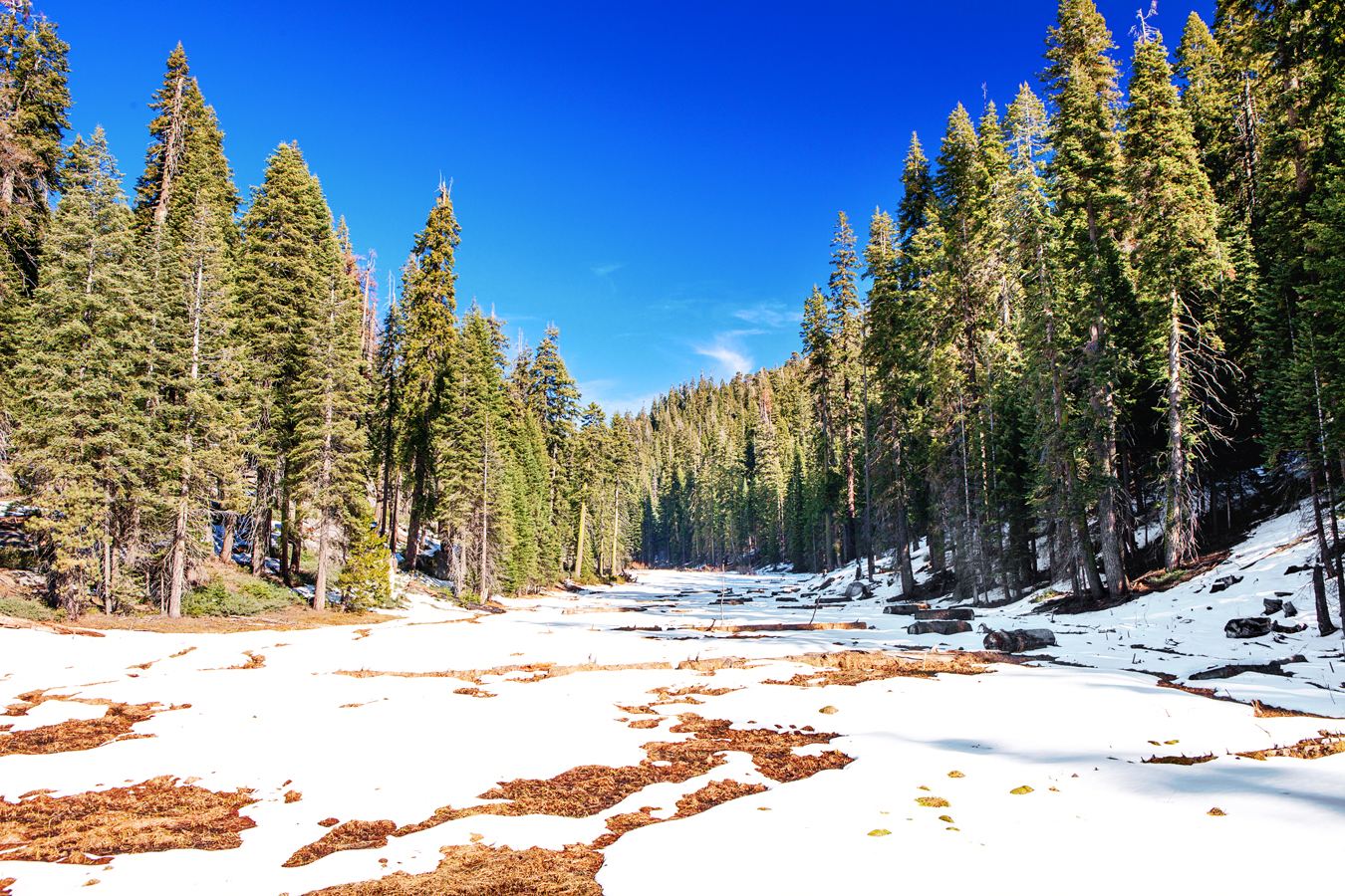 Winter in Sequoia & Kings Canyon National Parks